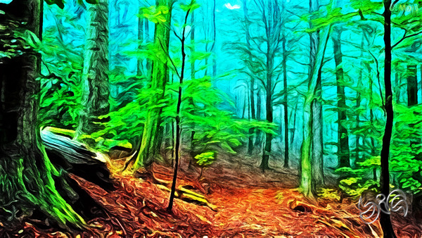 big-floresta-nevoeiro-wallpaper_resized